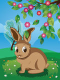 Brown Rabbit on Lawn royalty free illustration