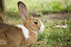 Brown Rabbit. In the Park stock photos