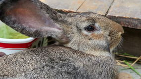 Brown rabbit resting Stock Photography