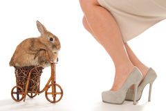 Brown rabbit riding bike Stock Image