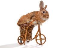 Brown rabbit riding bike Stock Image