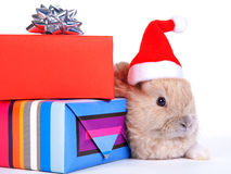 Brown rabbit in santa hat and christmas boxes, iso Royalty Free Stock Images