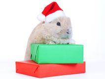 Brown rabbit in santa hat and christmas boxes, iso Stock Photography