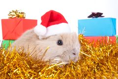 Brown rabbit in santa hat and christmas decoration Royalty Free Stock Photo