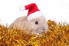 Brown rabbit in santa hat and christmas decoration Royalty Free Stock Photography