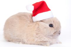 Brown rabbit in santa hat, isolated Royalty Free Stock Photos