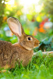 Brown rabbit sitting in flower garden Stock Images