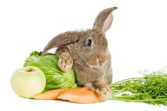 Brown rabbit with vegetables Royalty Free Stock Photography
