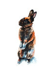 Brown rabbit watercolor Royalty Free Stock Photography