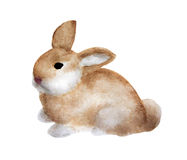 Brown rabbit watercolor illustration Royalty Free Stock Photography