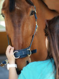 BROWN RACE HORSE Stock Photography