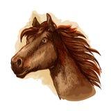 Brown racehorse for horse racing design Stock Photos