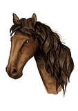 Brown racehorse sketch for horse racing design. Brown racehorse sketch with head of purebred mare horse of arabian breed. Horse racing, equestrian sporting Royalty Free Stock Photo