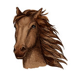 Brown racehorse sketch for horse racing design Royalty Free Stock Images