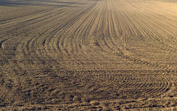 Brown raked field. A field of just raked brown earth Royalty Free Stock Photography