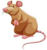 Brown rat Royalty Free Stock Photos
