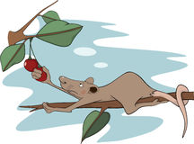 Rat and a cherry. Cartoon Stock Image