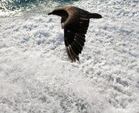 Brown-Raubmöwe-Ozean-Schaum Lizenzfreies Stockbild