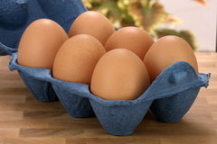 Brown raw eggs Stock Images