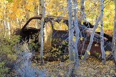 Brown rdzewiał zaniechaną samochód ramę w złotym Osikowym gaju Obrazy Stock