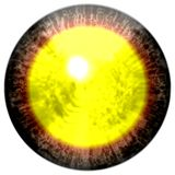 Brown red eye with open pupil and bright yellow retina in background. Dark colorful iris around pupil,  isolated  eye. Royalty Free Stock Images