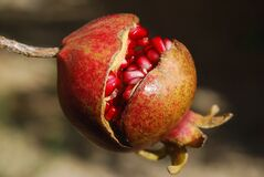 Brown and Red Round Fruit Royalty Free Stock Images