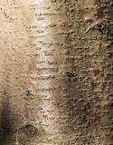Brown and red tree bark texture. With sunlight royalty free stock images