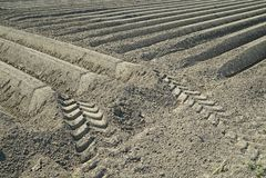 Brown-Reihen von Erde potatoe Felder in Zeeland bildend lizenzfreies stockfoto