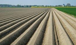 Brown-Reihen von Erde potatoe Felder in Zeeland bildend lizenzfreie stockfotos