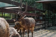 Brown Reindeer Near on Brown Wooden Fence Royalty Free Stock Photo