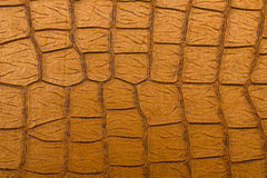 Brown retro crocodile Leather Texture. Close-up Royalty Free Stock Photo