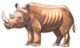 Brown rhinoceros Stock Photos
