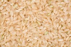 Brown Rice Stock Photo