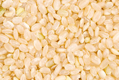 Brown rice as background Royalty Free Stock Images