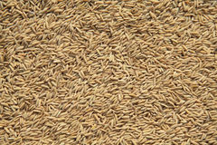 Brown rice background Stock Image