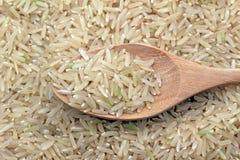 ฺBrown rice Stock Photography