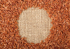 Brown rice on burlap fabric Stock Images