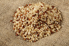 Brown rice close up Royalty Free Stock Photo