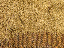 Brown rice drying Stock Images