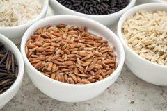 Brown rice grain Royalty Free Stock Image
