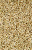 Brown rice seeds Royalty Free Stock Photo