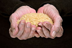 Brown rice in senior woman hands Royalty Free Stock Photo