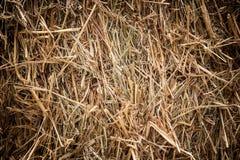 Brown rice straw Royalty Free Stock Photos