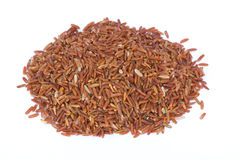 Brown rice Stock Photography