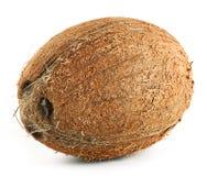 Brown ripe coconut Stock Photo