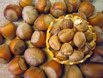 Ripe tasty hazelnuts in plate Royalty Free Stock Images