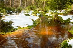 Brown river on the peat bog, forest covered with moss. Poland, Brown river on the peat bog, forest covered with moss europe near zieleniec riverbed marshes snow royalty free stock images