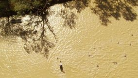 Brown river with people swimming. A birds eye view shot of people on a brown river with trees. Camera slowly pans to the left and right in slow motion stock footage