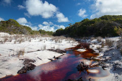 Brown river in white sands on Fraser Island Stock Photo