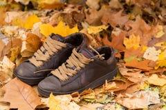 Brown riveste di pelle le scarpe da tennis/scarpe, foglie di autunno fotografie stock